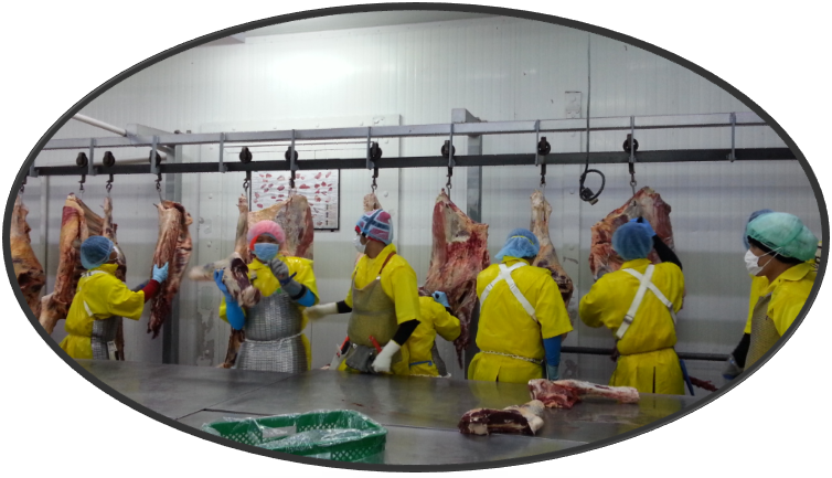 pics Filipino meat workers supplied by Yangwha Global Pty Ltd..